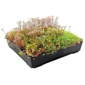 Wallbarn M-Tray Modular Sedum Wildflower Green Roof - 500mm x 500mm x 100mm